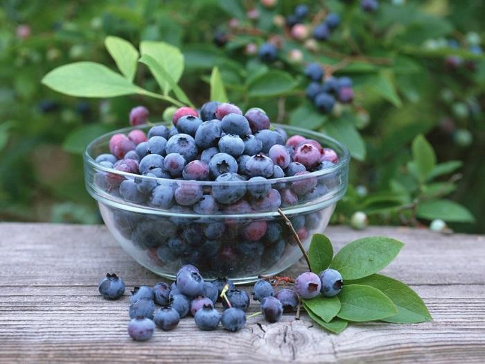 Bilberry-3