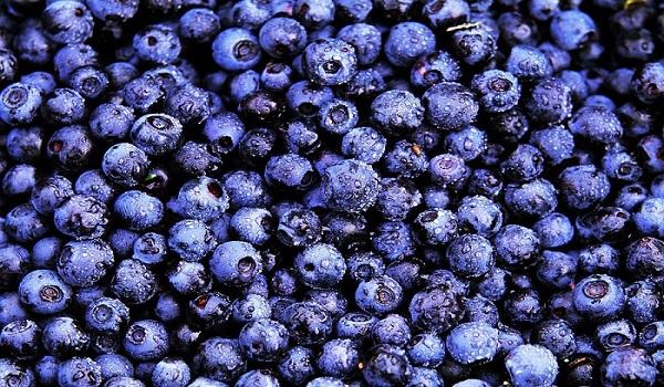 Bilberries improve vision, lower blood sugar levels
