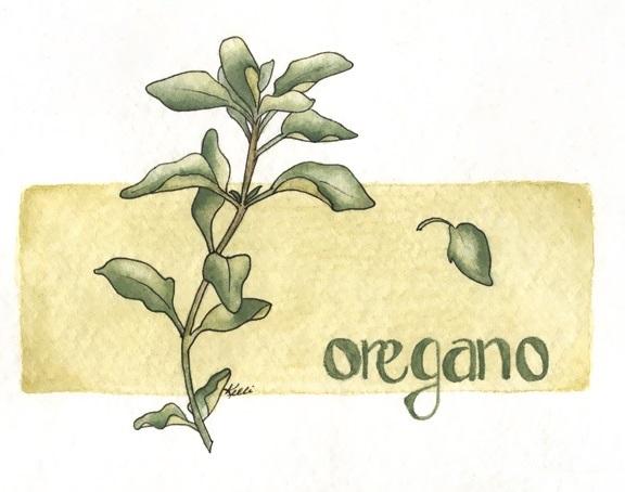 Oregano-2