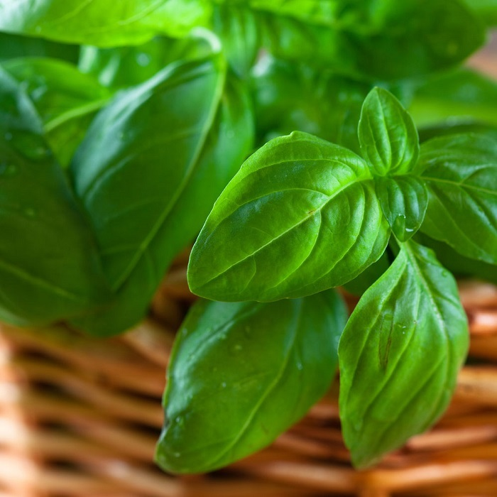 Photo Credit http://www.motherearthliving.com/plant-profile/a-basil-harvest.aspx