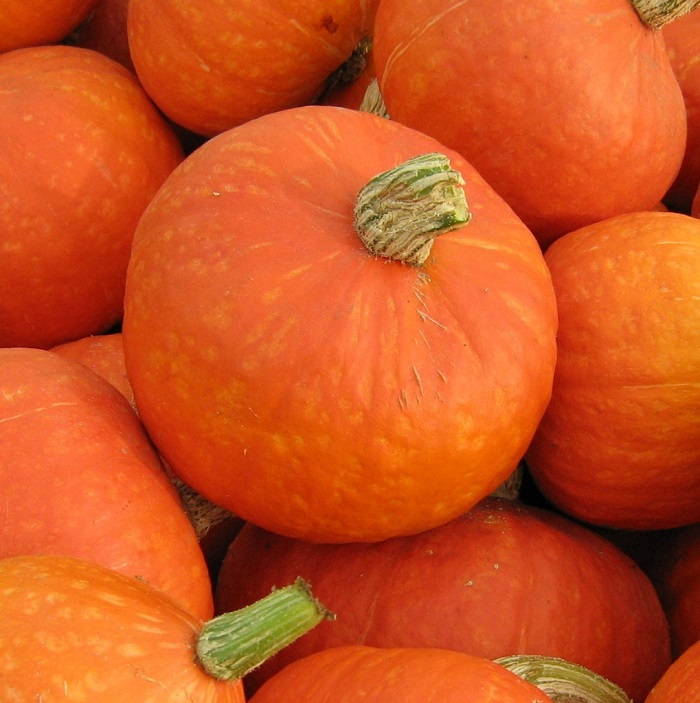 Photo Credit  http://frontporchfarm.net/produce/winter-squash/amber-cup-kabocha/