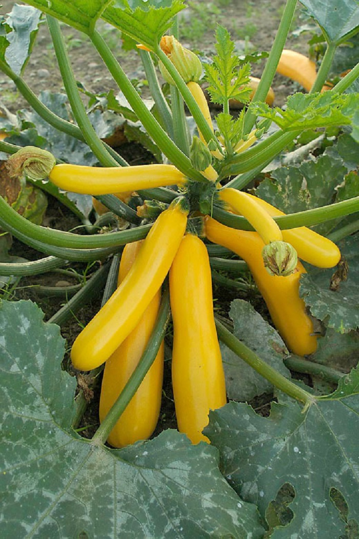 How To Identify Squash—Different Squash Types You Didn't ...
