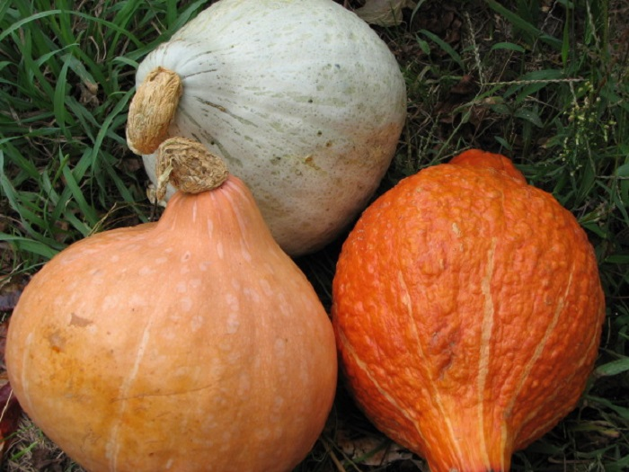Photo Credit  https://ybertaud9.wordpress.com/2012/09/21/awesome-winter-squash-recipes/