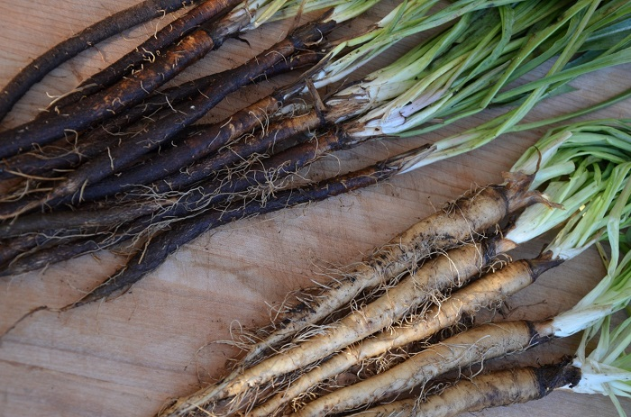 Photo Credit https://www.washingtonpost.com/lifestyle/home/salsify-and-scorzonera-the-rarer-roots/2012/11/27/03f350ce-3256-11e2-92f0-496af208bf23_story.html