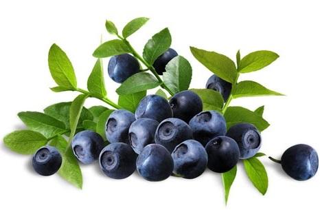 Bilberry-2
