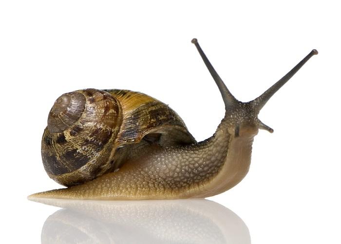 Snails-2