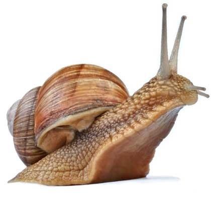 Snails-3