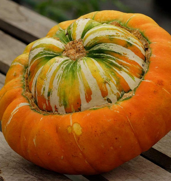Photo Credit  https://www.westcoastseeds.com/shop/vegetable-seeds/squash-seeds/specialty-squash-seeds/turks-turban-squash-seeds/