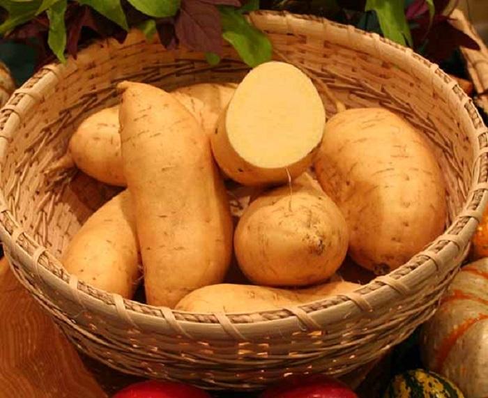 Photo Credit http://www.ncsweetpotatoes.com/sweet-potatoes-101/sweet-potato-varieties/